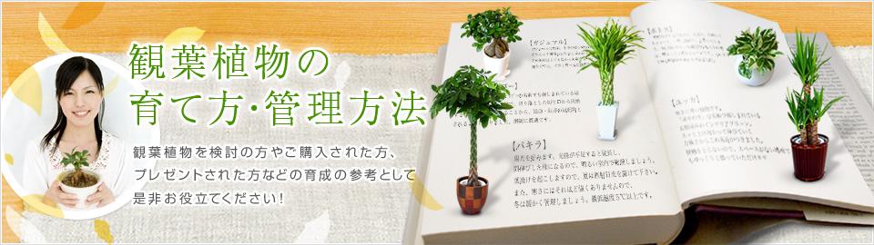 観葉植物図鑑|観葉植物を検討の方やご購入された方、プレゼントされた方などの育成の参考として是非お役立てください!