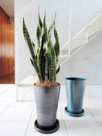 サンスベリア・ローレンティー 樹脂製鉢シャイニーシリーズ・12A22